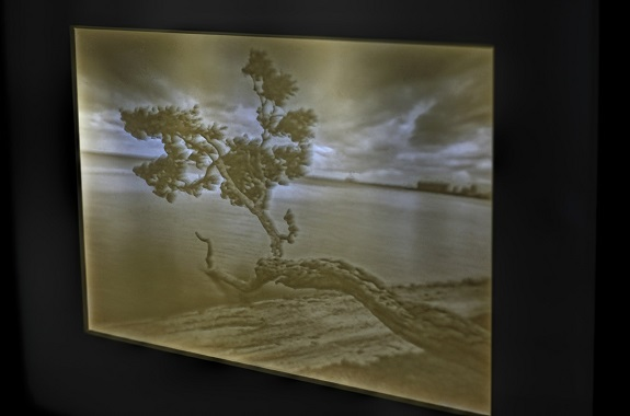 "Close-up of the backlit lithopane of ""Tree in Key Biscayne"" by photography Sandra Canning. Photo by Sandra Canning, www.sandracanning.com"