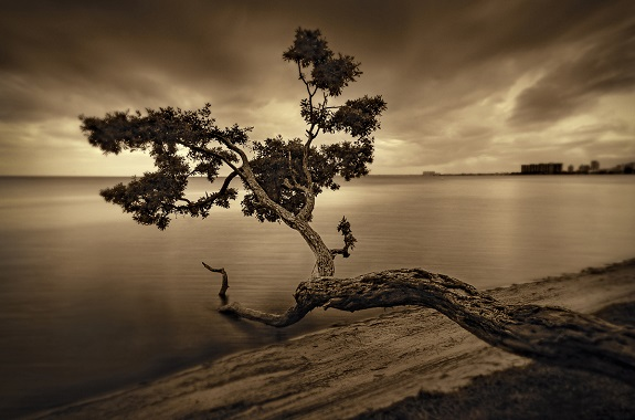 "Original 2D photography of ""Tree in Key Biscanyne"" by photographer Sandra Canning, www.sandracanning.com"